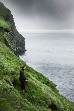 A man waiting for a puffin to get close enough for him to catch it in his net