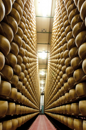 Wheels of Parmigano Reggiano maturing