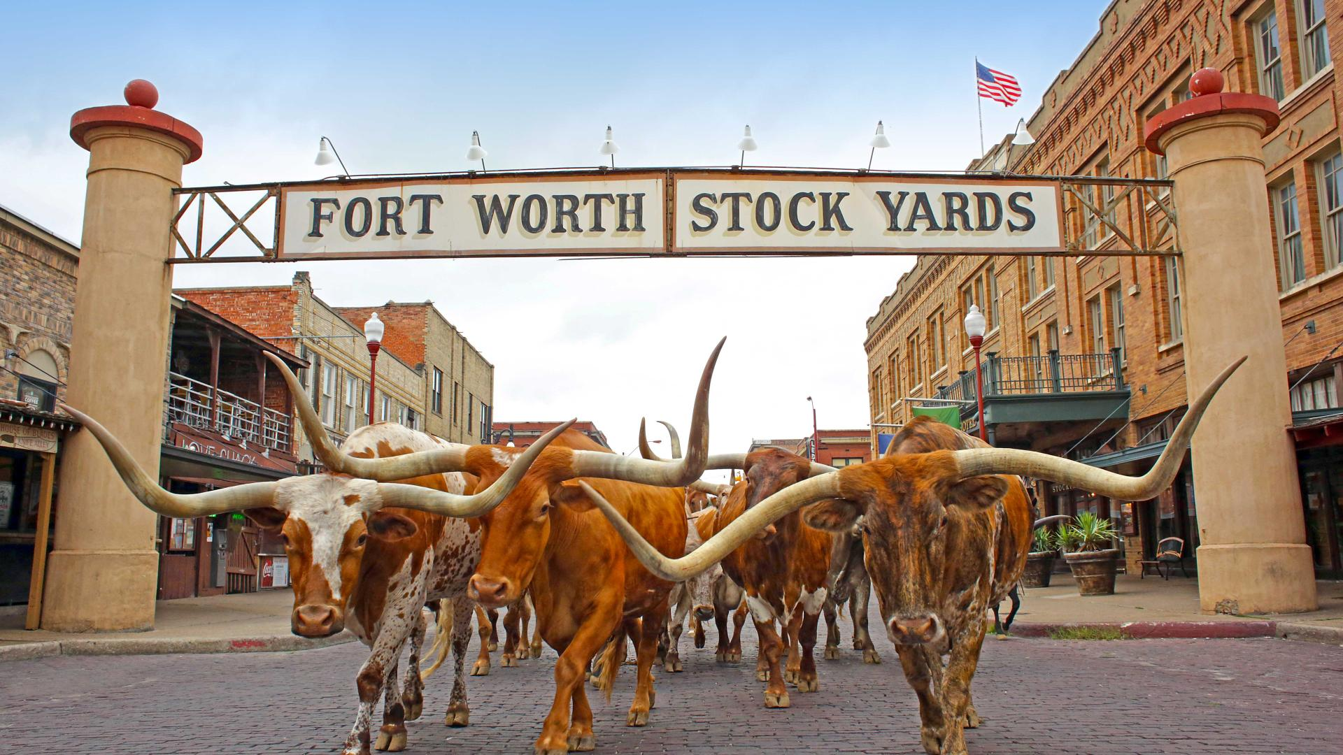The Fort Worth Cattle Drive