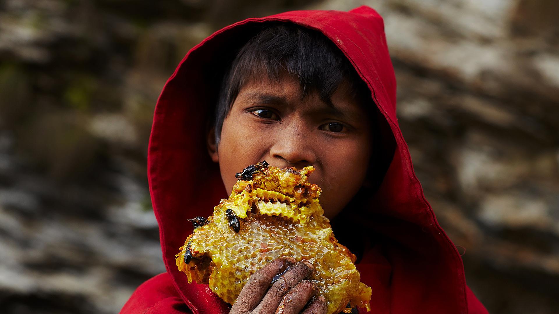 Hunger for Honey