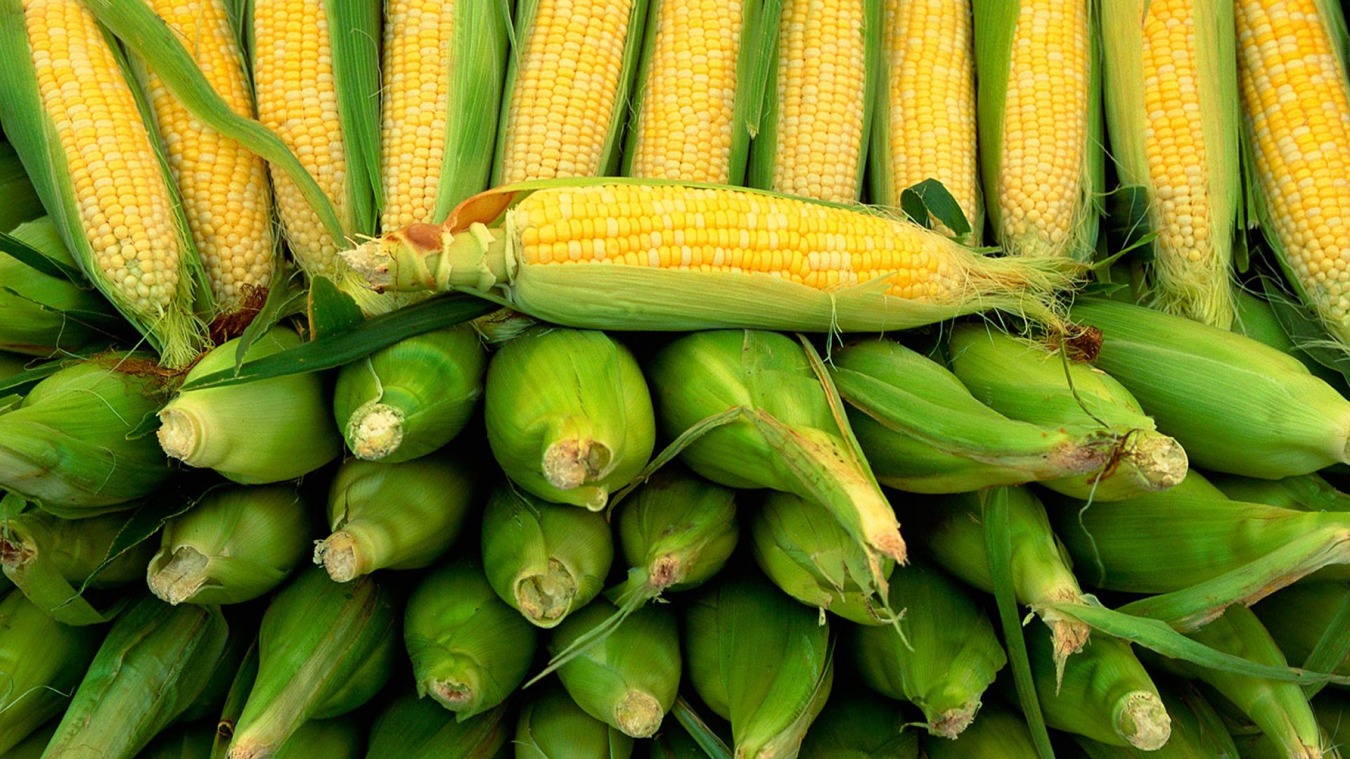 Tom Hunt tells us how to eat corn