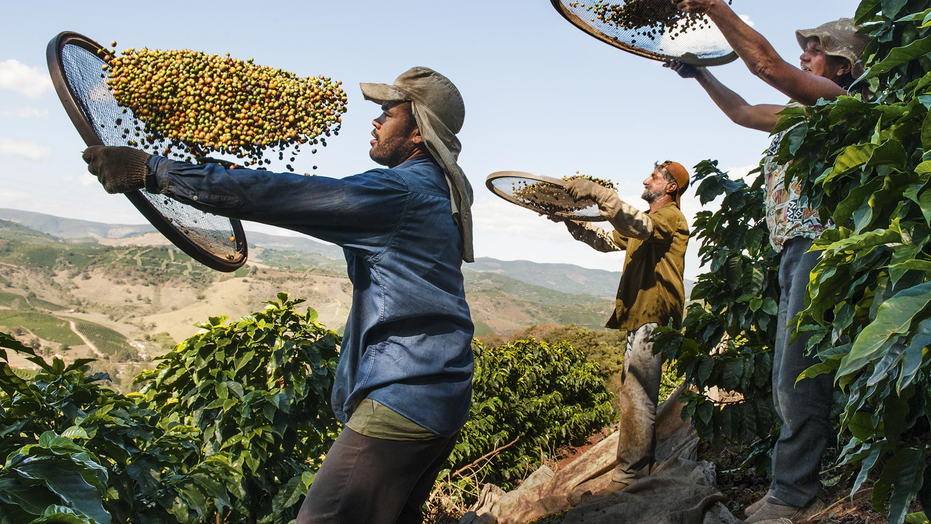 Coffee growing in Brazil. Photograph by Lavazza/Steve McCurry