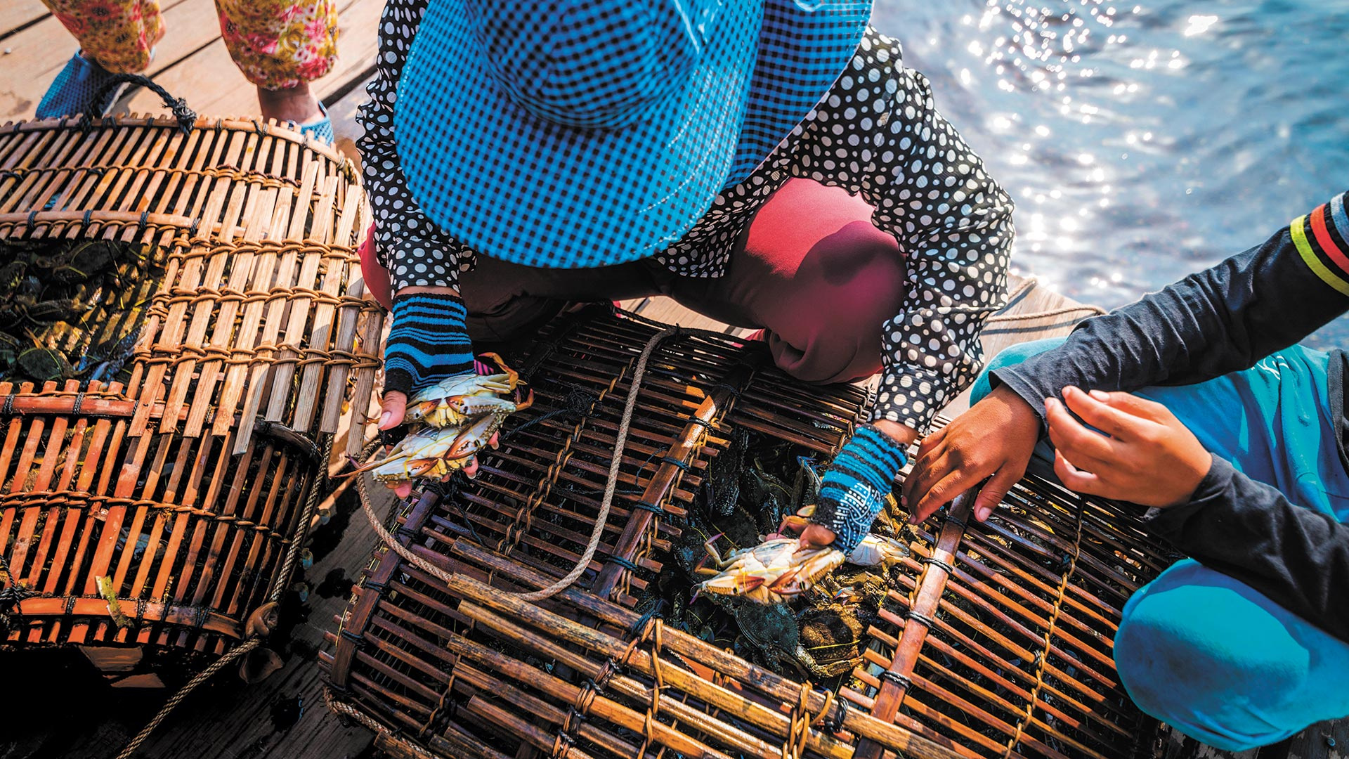 Fishermen empty their crab traps every morning in Kep. Photograph by Ivoha / Alamy