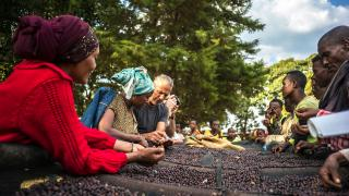 Beans being sorted by hand on one of Union Hand Roasted's sourcing trips to Ethiopia