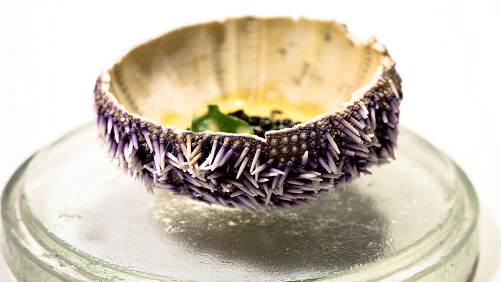An example of the New Nordic cuisine