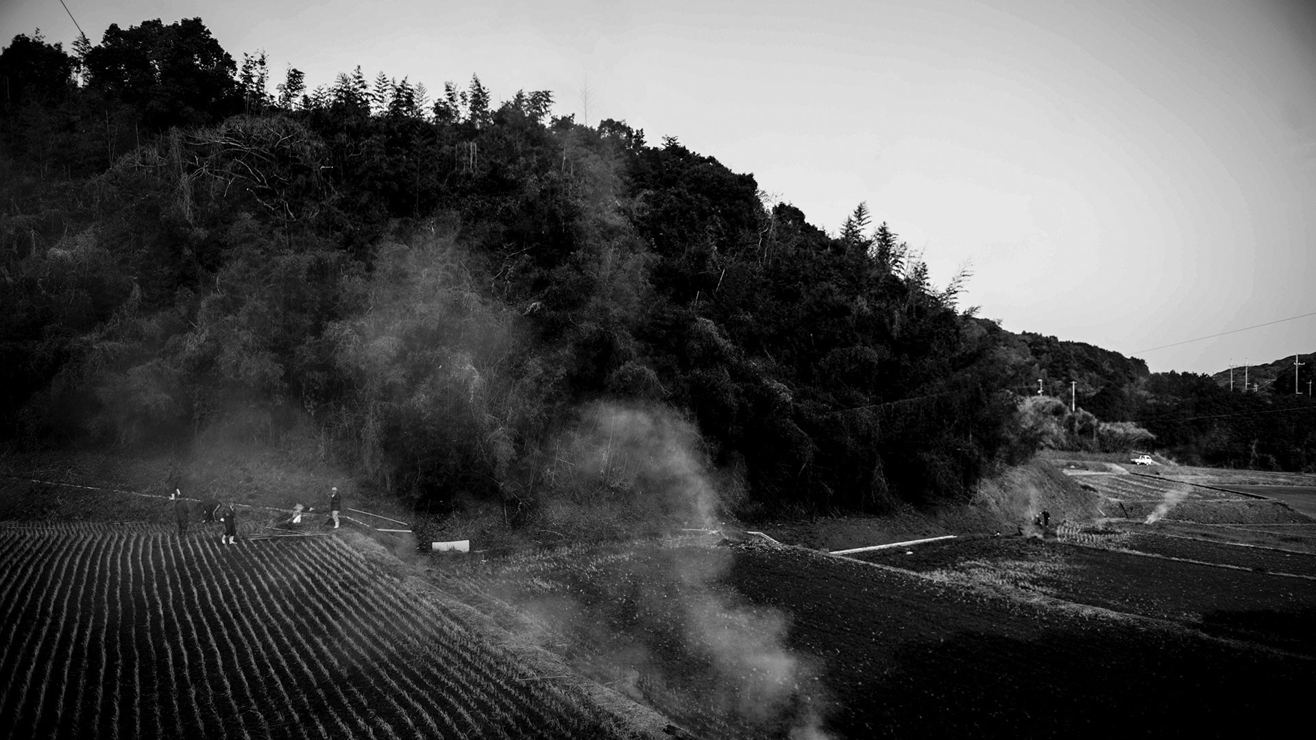 The process of brewing sake begins with brown rice, which is harvested in the autumn