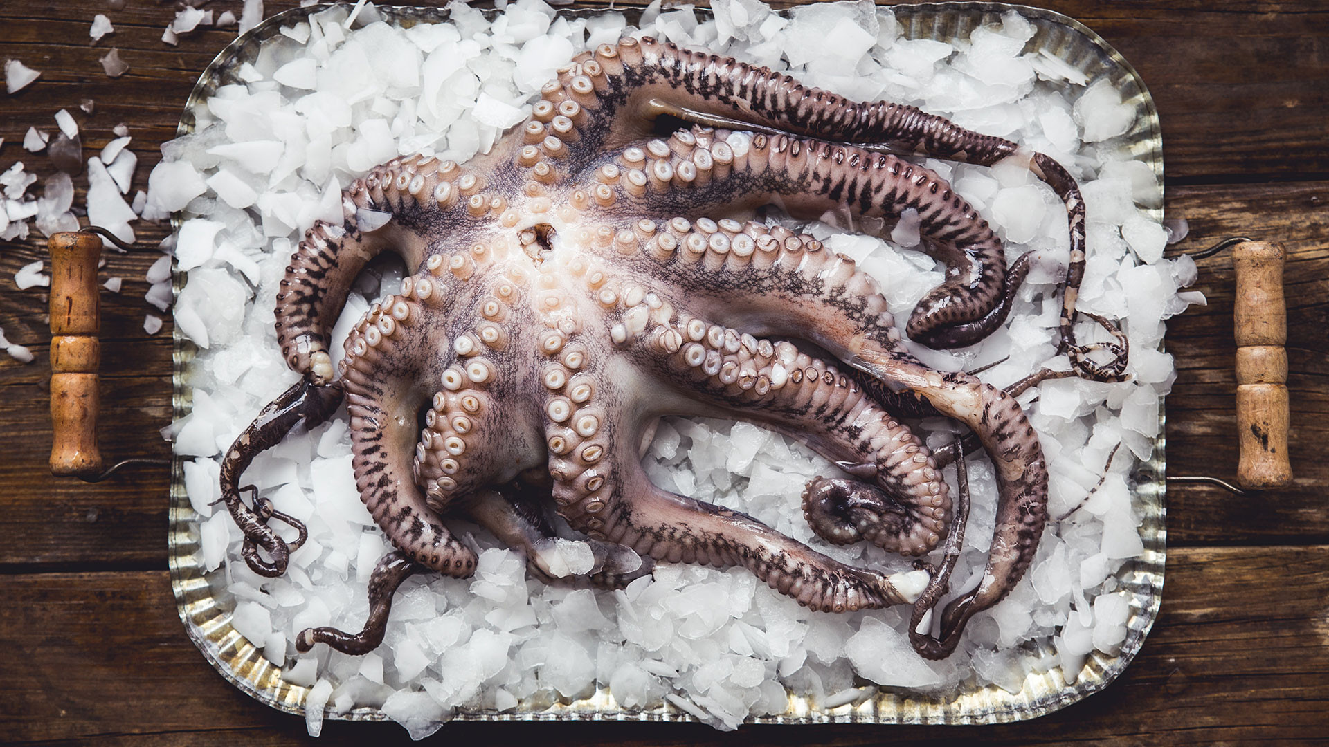 Pink Lady Food Photographer of the Year Cream of the Crop, Petra Novotna, Octopus on Ice