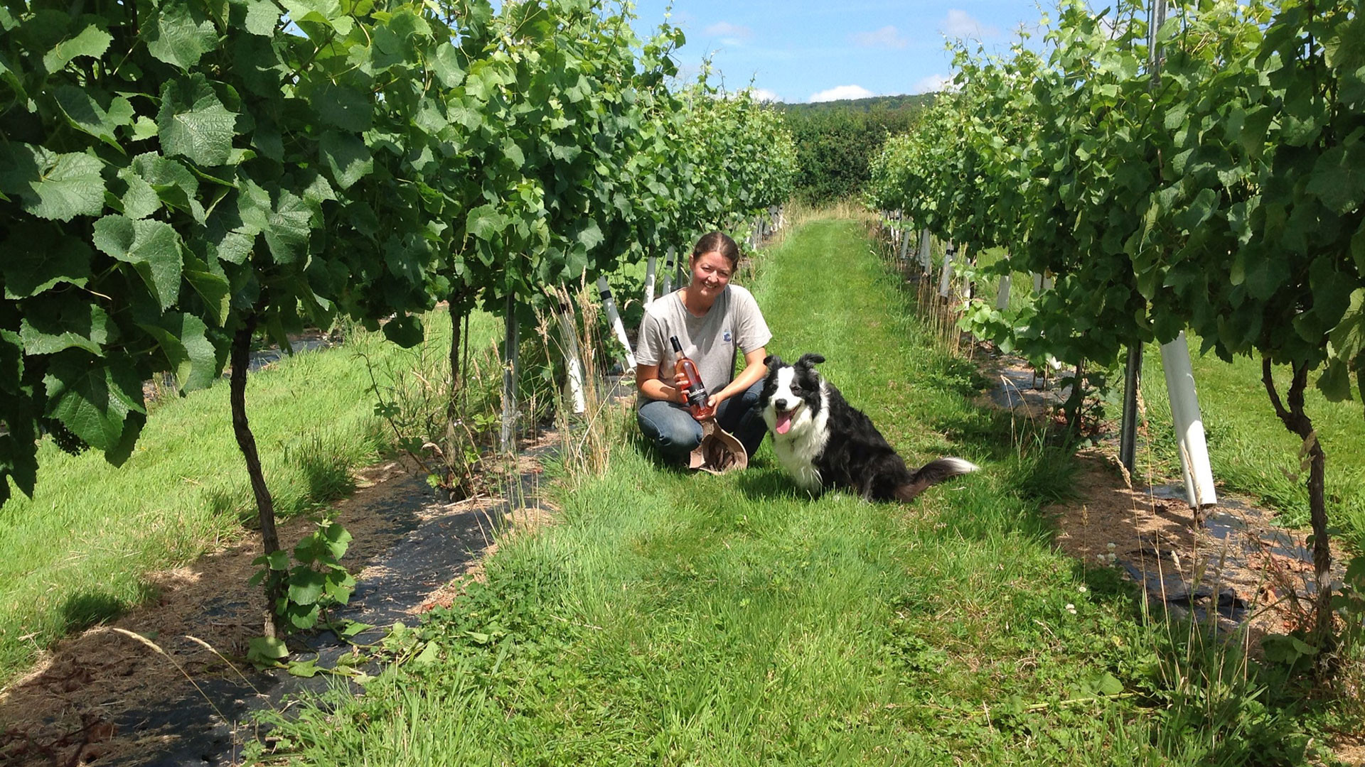 Dunleavy Vineyards