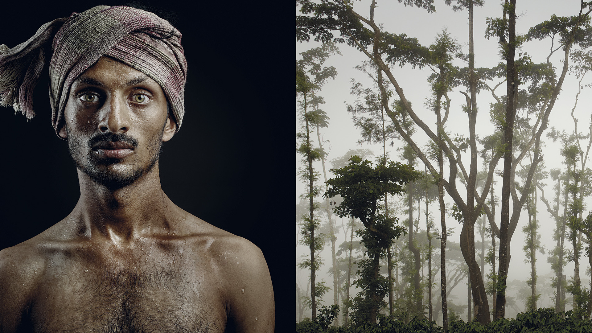 The disparate nature of the forest — where the coffee plant grows amidst an infinite number of other trees — can be found in the features and hues of a young man's face, which blends diverse origins and provenances.