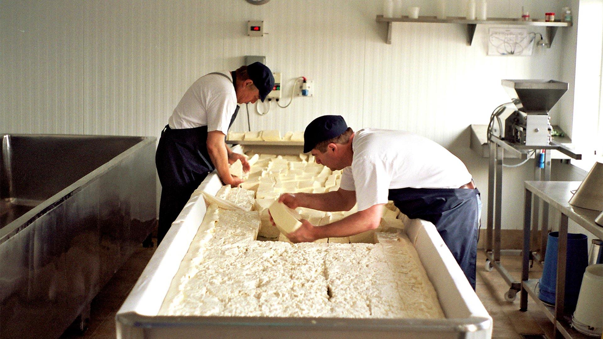 Cutting curd at Stichelton Dairy