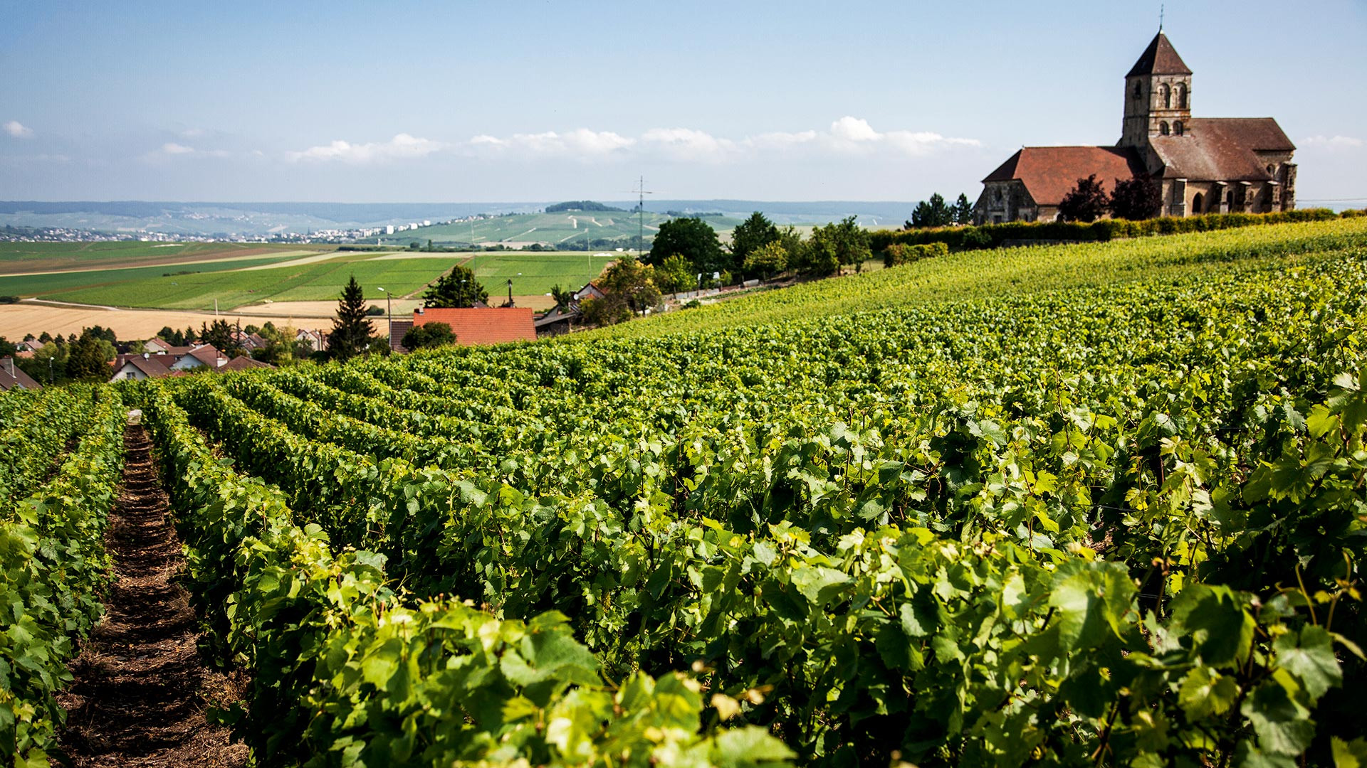 One of the vineyards owned by Bollinger