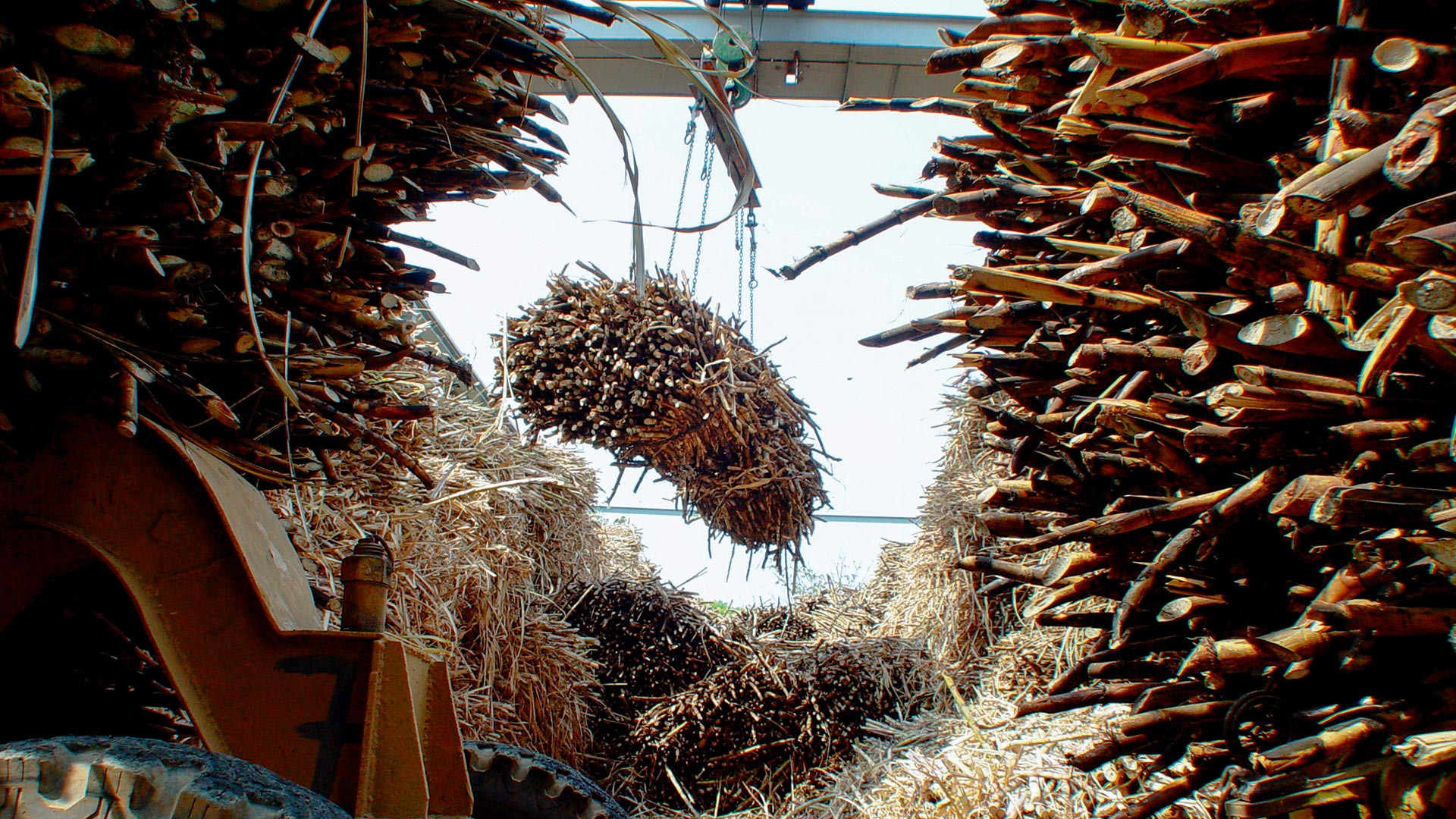 Harvested sugard cane at the Varela estate
