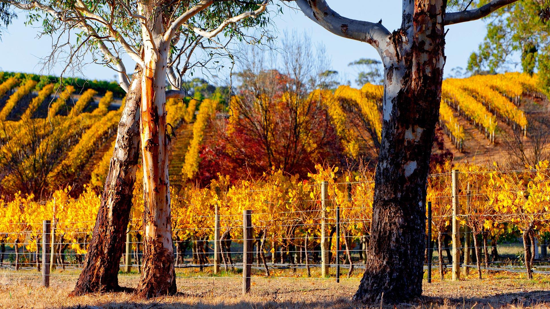 South Australia's wine making regions
