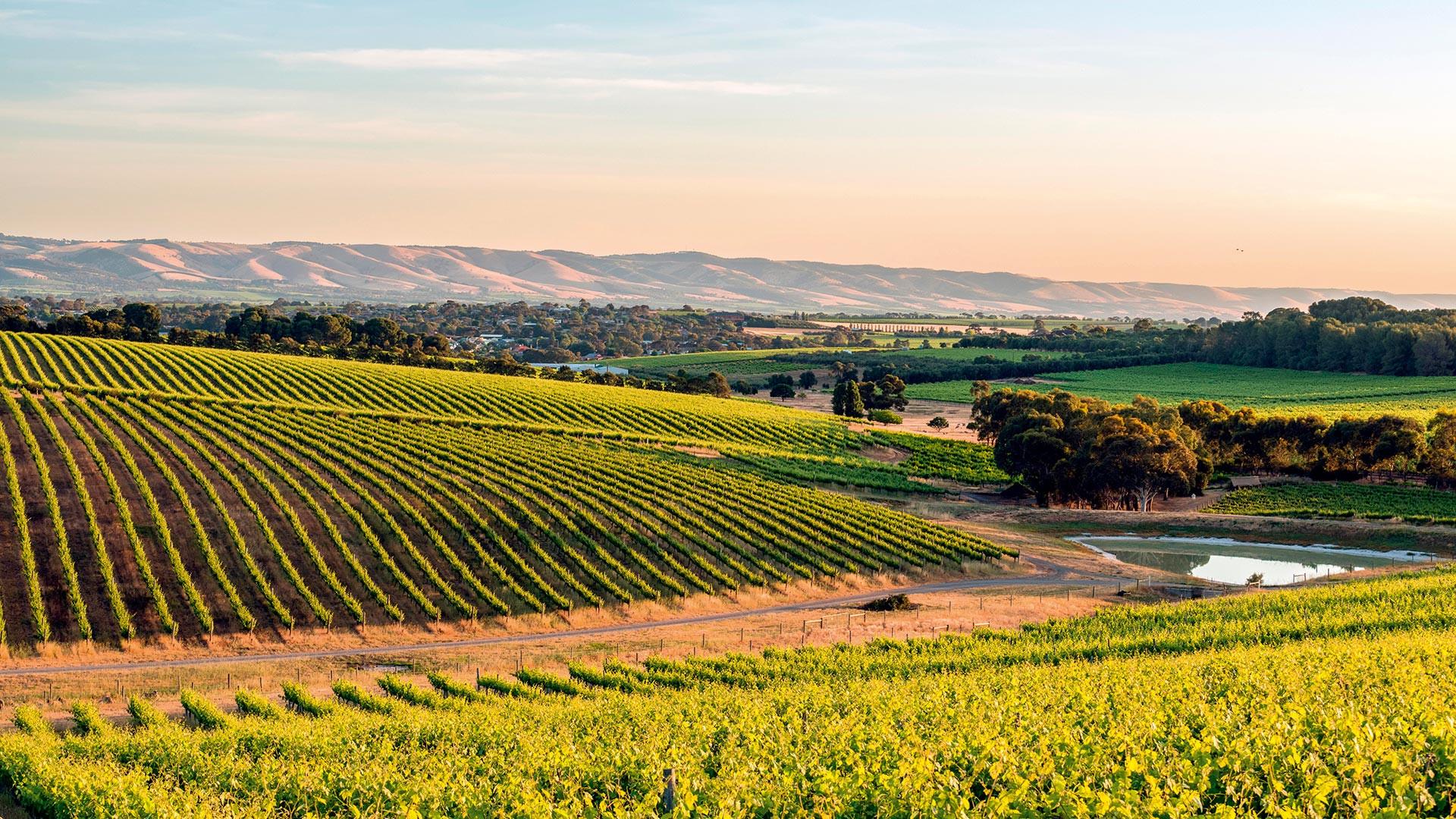 McLaren Vale, South Australia wine growing region