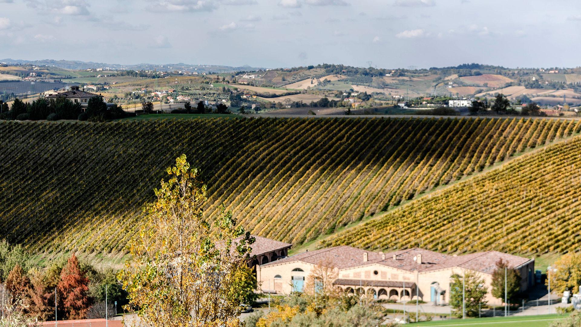 San Patrignano's vineyards