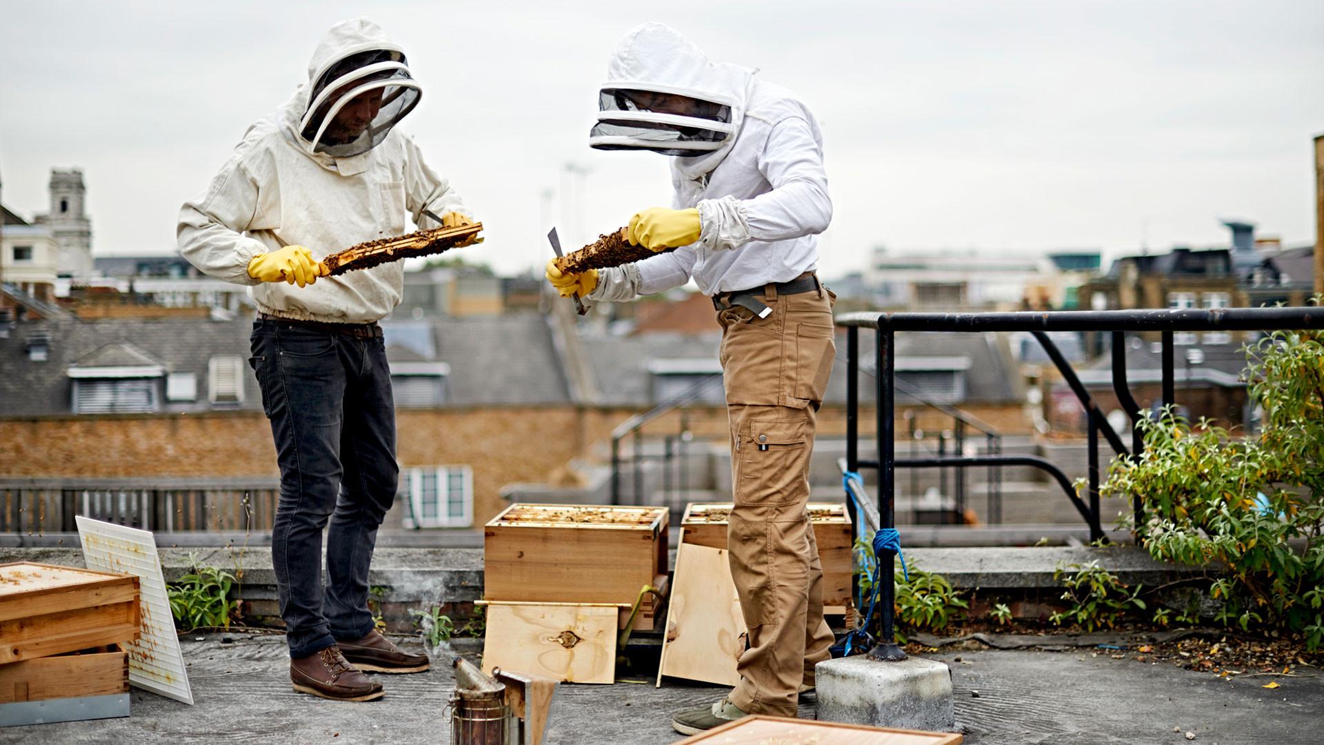 Black Bee Honey founders tending to their bees