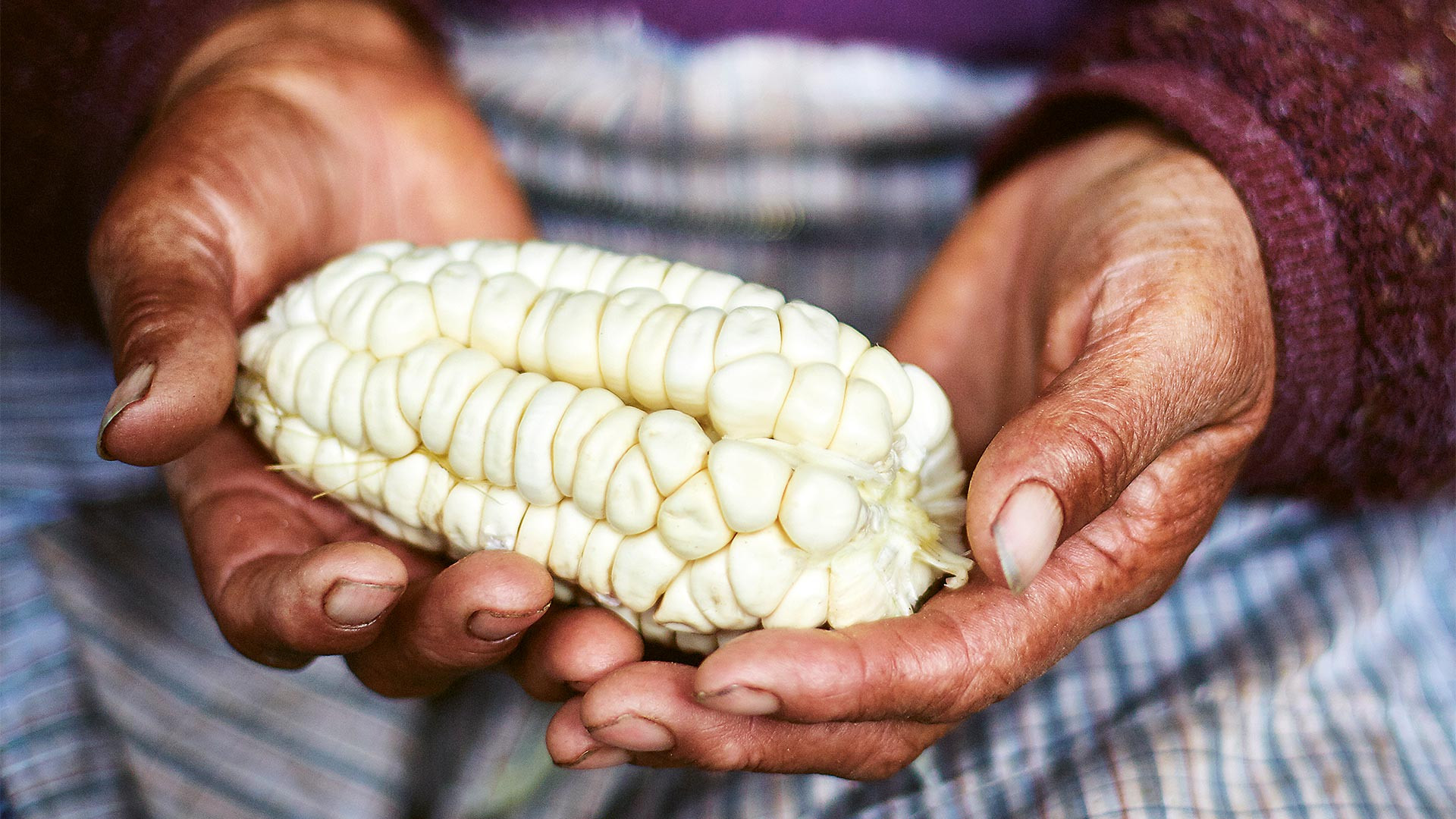 The pale yellow corn found in Peru