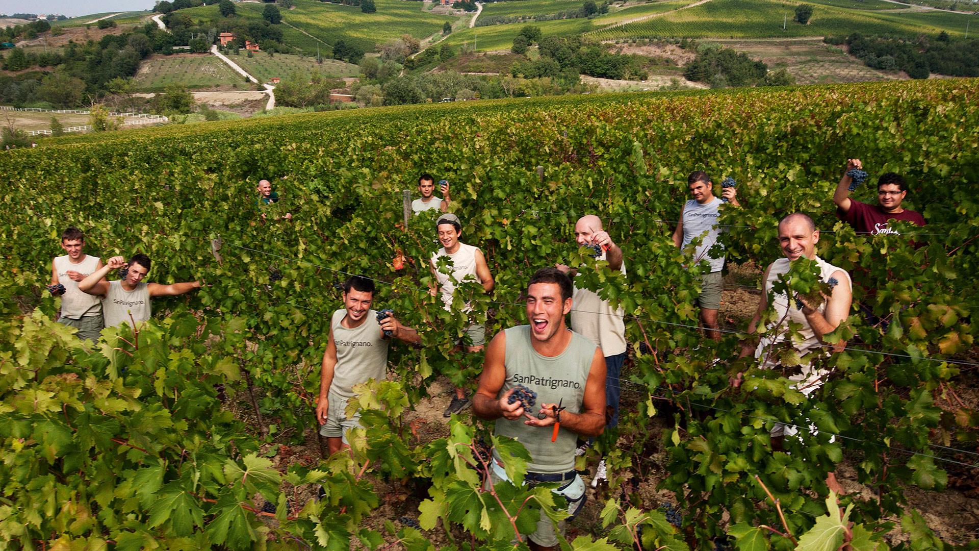 Residents in the vineyards, San Patrignano, Italy