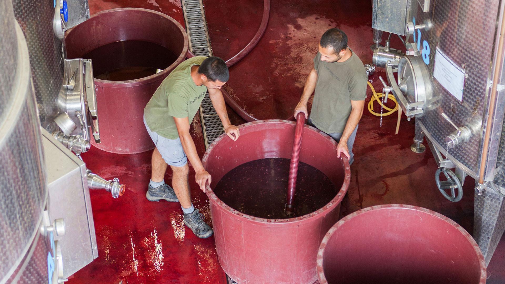 Residents in the winery, San Patrignano, Italy