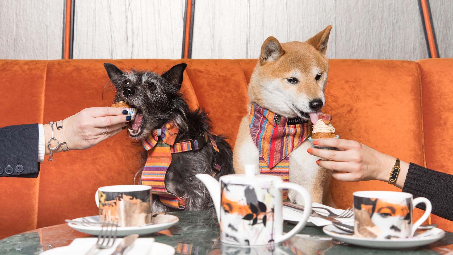 Savage Garden dog brunch