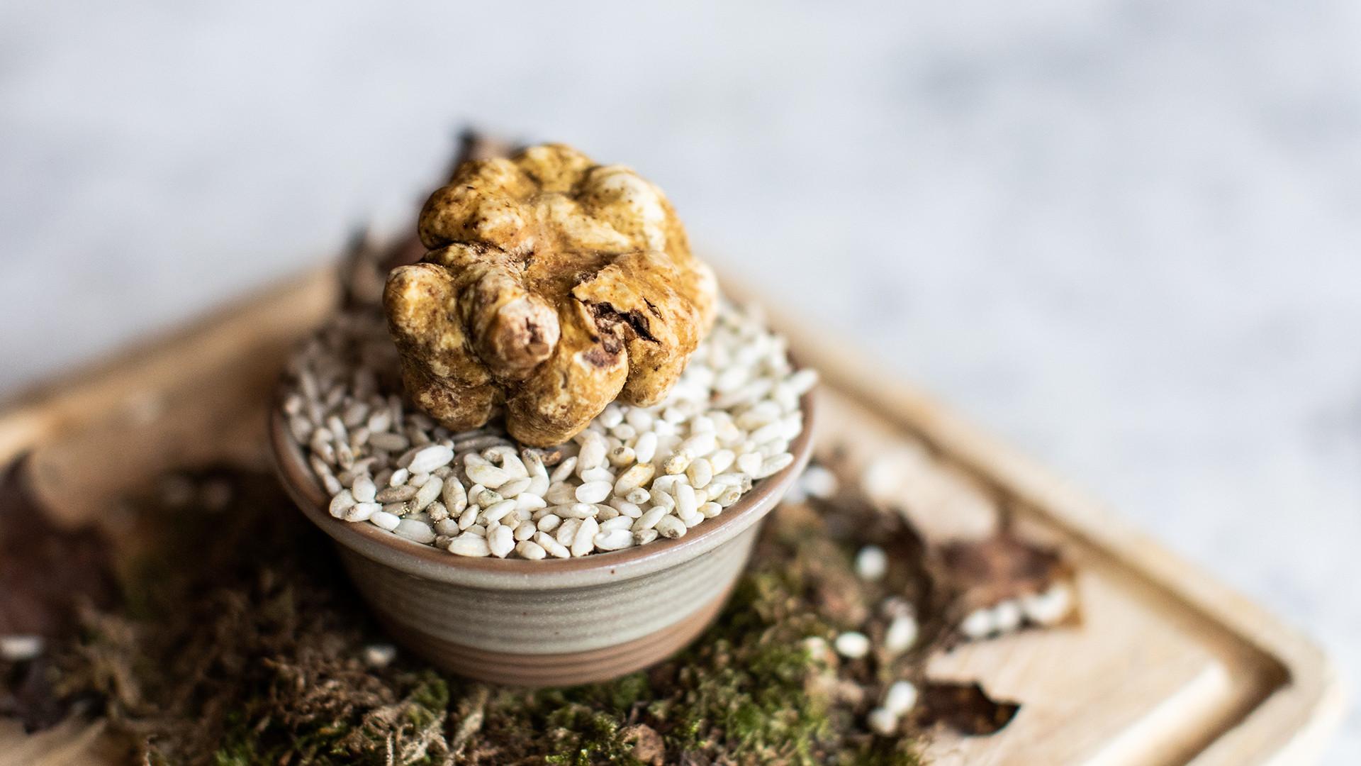Theo Randall white truffle