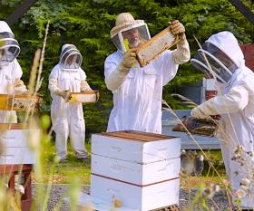James Hamill at the Hive Honey Shop