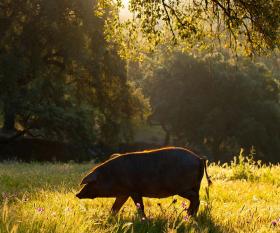 Fat of the land: a trip to Jabugo to see Iberico pork brand Cinco Jotas