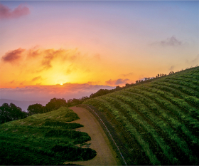 South Africa's Cape Winelands; Photograph by wilpunt / Getty Images