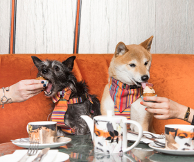 Savage Garden's bottomless dog-friendly brunch