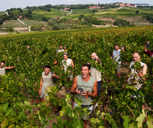 Residents in the vineyard at San Patrignano, Italy; Photographs via San Patrignano