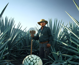 An agave farmer, or jimador, at Patrón in Jalisco, Mexico